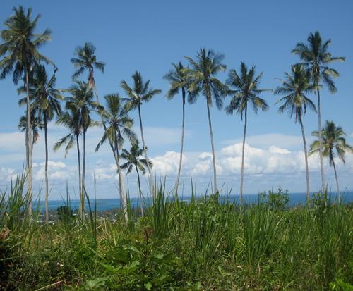 Primitive-paradise