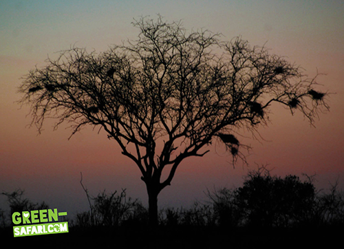 Green-Safari-Kenya-Sunset