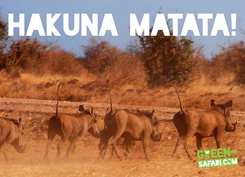 Green-Safari-Kenya-Hakuna-Matata