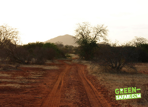 Green-Safari-Kenya-Road