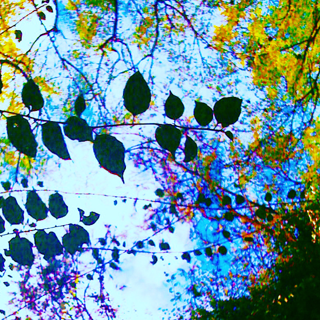 6-Nature-Creative-Muse-Leafy-Skies